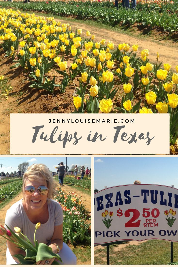 Did you know that you can find beautiful tulips in all varieties in Texas?  That's right, fields of them ... and they are yours for the taking.  Come find out more.