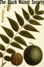If you have a Juglans nigra growing anywhere on your property, or if your neighbor's J. nigra overhangs your property, I am pleased to welcome you to The Black Walnut Society!  As you know, the lov...