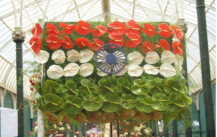 Tricolor Flowers at Lalbagh Flower Show