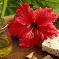 El Hibiscus tiene alfa-hidroxi ácidos (AHAs) que actúan como exfoliantes de la piel, en el control de los brotes de acné, y tiene propiedades anti-envejecimiento, resultando en una piel mas firme.
