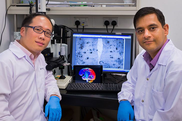 Nanyang Technological University, Singapore (NTU Singapore) scientists have found a new way to treat dementia by sending electrical impulses to specific areas of the brain to enhance the growth of new brain cells