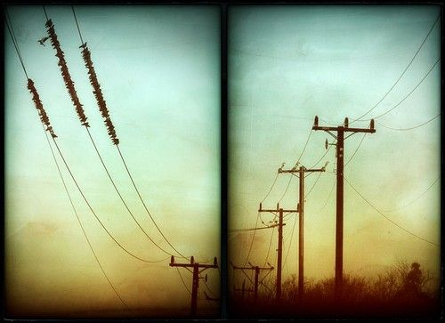 this i repetition because all the birds that are the same and the power lines are repeating