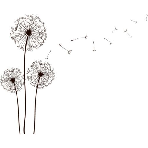 """Dandelion pencil draw - will be nice with """"breath of life"""" or something similar in the parts as they blow away...."""