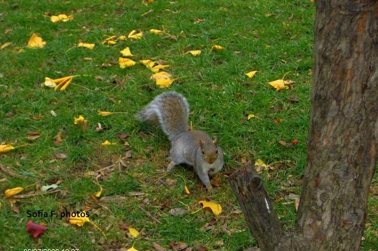 Autumn - Central Park