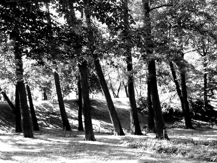 Park Kellera