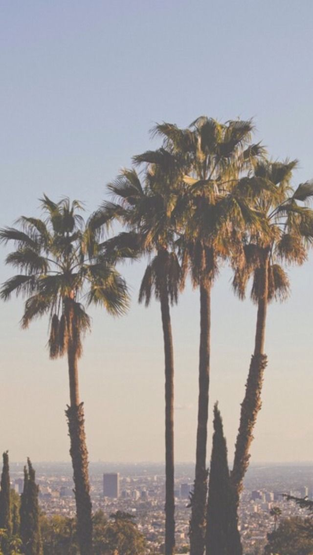 Iphone Palm Trees Backgrounds Palms Wallpapers Lockscreen