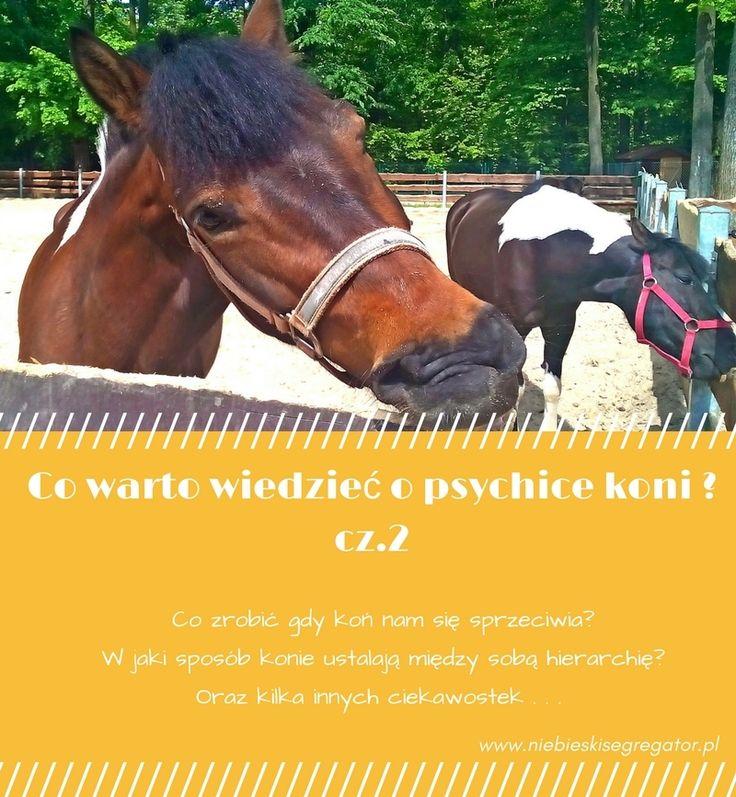 Co zrobić gdy koń nam się sprzeciwia? W jaki sposób konie ustalają między sobą hierarchię? Oraz kilka innych ciekawostek . . .