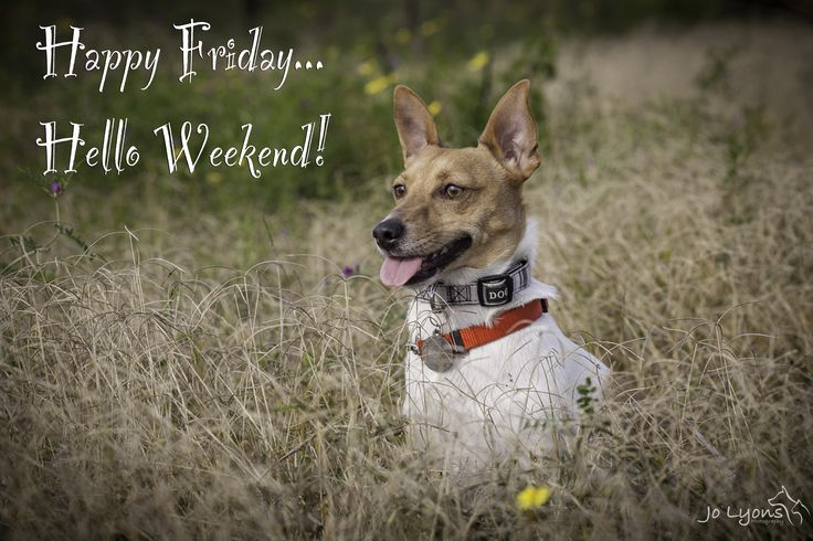 Harvey loves a Happy Friday