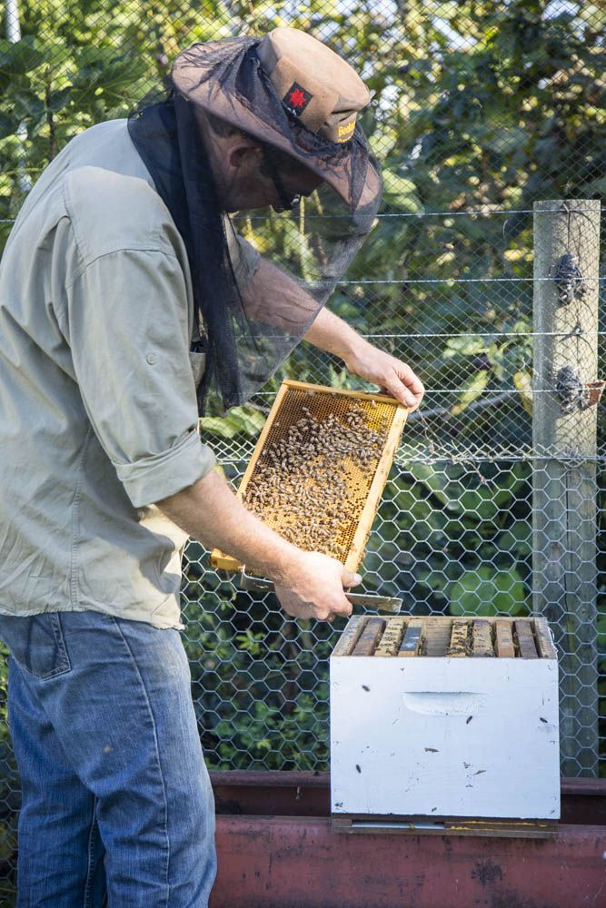 Wine Food Farmgate: Pure Peninsula Honey, Mornington Peninsula