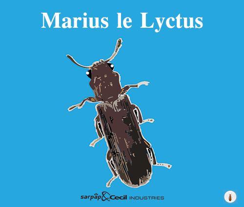 http://www.traitons-du-bois.com/lyctus-insecte-larve-xylophage/