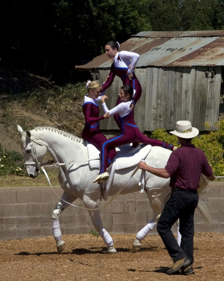 231 Best Images About Horses Vaulting On Pinterest