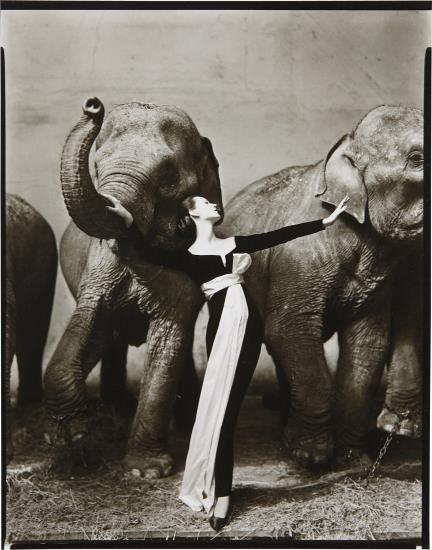 Richard Avedon, Dovima with Elephants, Evening Dress by Dior, Cirque d'Hiver, Paris