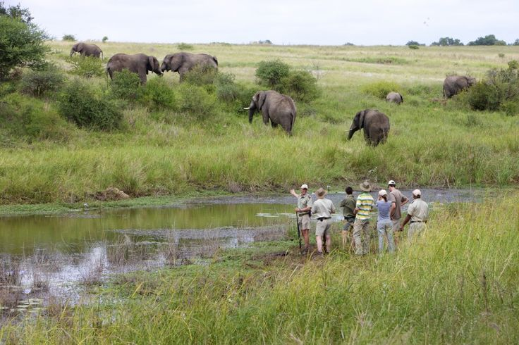Embark on a walking safari and open your senses to a whole new world of experiences!
