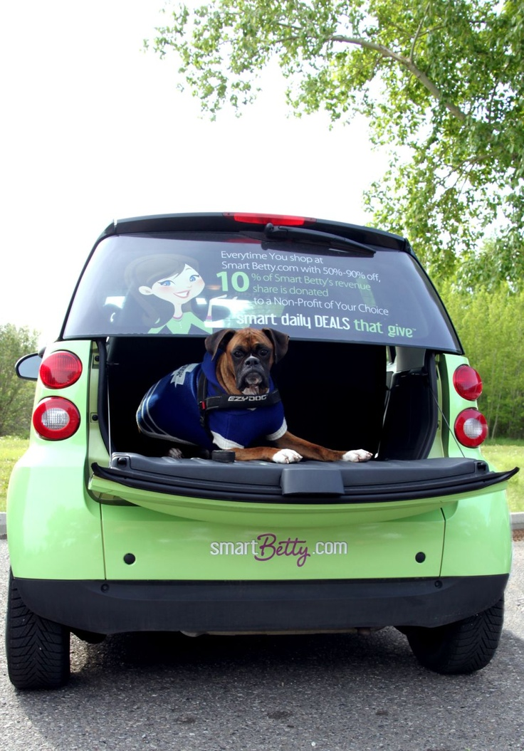 Gage catches a ride with Smart Betty at the Calgary Humane Society's Annual Dog Jog, 2012.