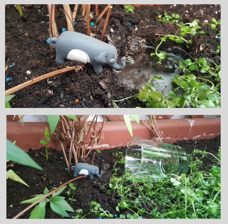 Image Ability | Week 3 Assignment.  Is it an elephant drinking in the pond, or a USB key in a flowerpot ?