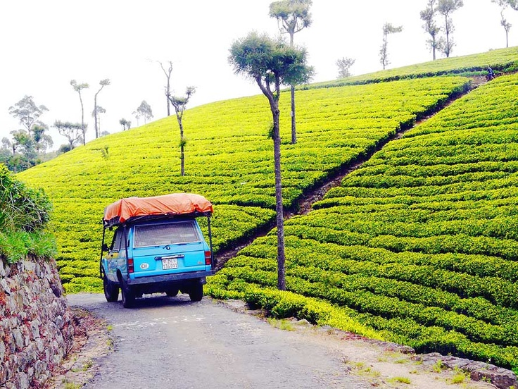 Typical Tea Country Roads...