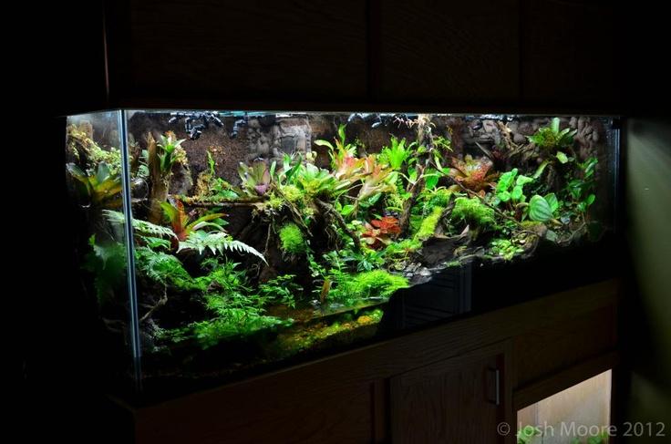 Josh Moore's 180 gallon viv build | Vivarium Inspiration ... 10 Gallon Dart Frog Vivarium