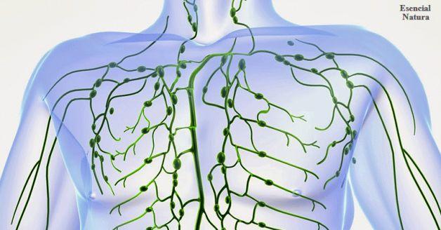Una Limpieza de 3- Día del Sistema Linfático  para mantenerlo saludable Todo el Año