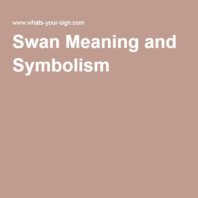 Swan Meaning and Symbolism