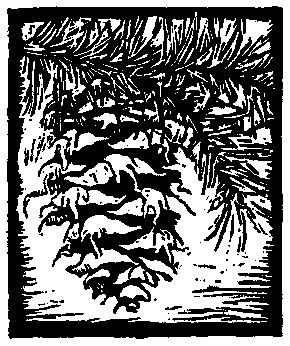 Douglas Fir Cone, Trees of Yosemite || Mary Curry Tresidder, Woodcut