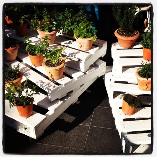 Pallet garden in Sydney cafe Orto