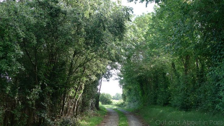 "In Normandy, France.  Hedgerows--called ""bocage"" in French.  Imagine…"