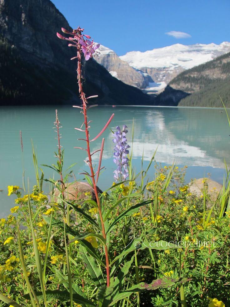 Les 25 Meilleures Id U00e9es De La Cat U00e9gorie Lac Louise Banff