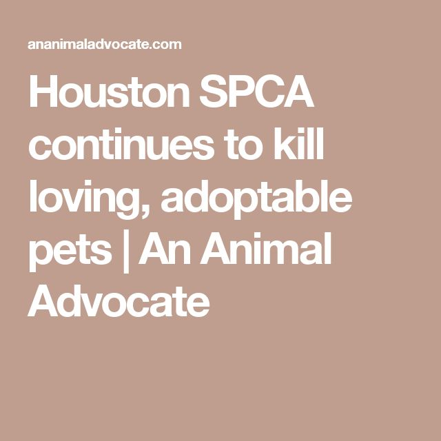 65% KILL RATE -Houston SPCA continues to kill loving, adoptable pets | An Animal Advocate