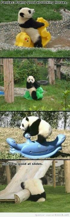 Never put a panda on a slide!!! Put him on rocking horses.