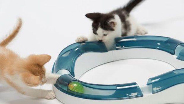 ¿Conoces los beneficios de los #Juguetes Interactivos? Te los contamos en: http://blog.hagen.es/?p=491 #Productos #Mascotas #Gatos