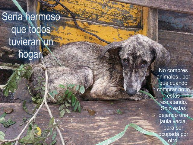 Esto Es Cierto Tomen Consciencia Perros Frases Mascotas Derechos De Los Animales