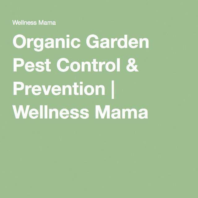 Organic Garden Pest Control Prevention Wellness Mama Diypestcontrol Bestpestcontrolproductforhome Bestpestcontrolspra Organic Gardening Garden Pests Pest Control