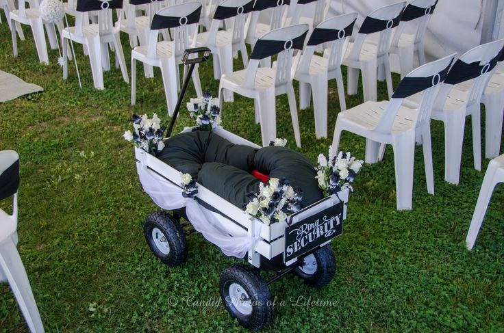 Wedding photographer, Candid Photos of a Lifetime  Ring Security buggy