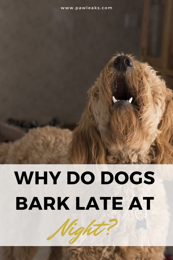 Why do dogs bark at night pawleaks in 2020 dog