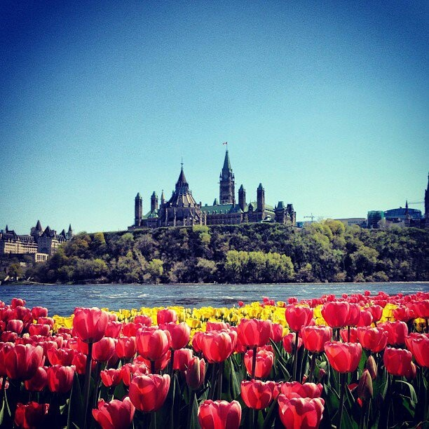 #Tulip Festival with #Parliament in the background #Ottawa #OTTcity #Canada #CapitalCity