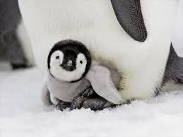 en sevimli hayvan yavruları - Google'da Ara