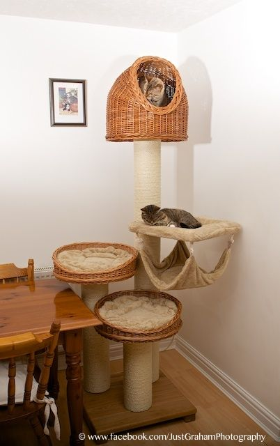 Fantastic cat tree from http://tiggatowers.com © www.bengalcatworld.com