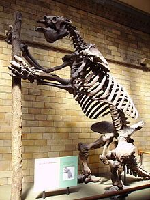Megatherium (Giant Ground Sloth). It weighed up to eight tons and upright stood about 20 ft tall. Went extinct in the Late Pleistocene