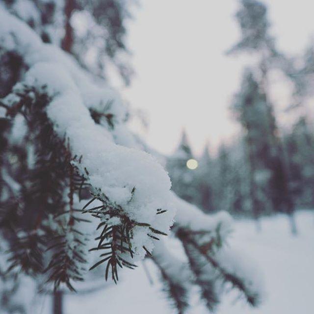 【maocorgi】さんのInstagramをピンしています。 《今回は街中から離れた森の中のコテージに泊まったのでこんなに美しい自然の中を散歩することができました🌲  今日は−15℃前後。連日−40℃近かったので、あまり寒く感じず快適でした👍  #旅#旅行#海外旅行#海外生活#雪#雪景色#フィンランド#ロヴァニエミ#ラップランド#森  #trip#travel#travelabroad#livingabroad#finland#rovaniemi#lapland#forest#snow》