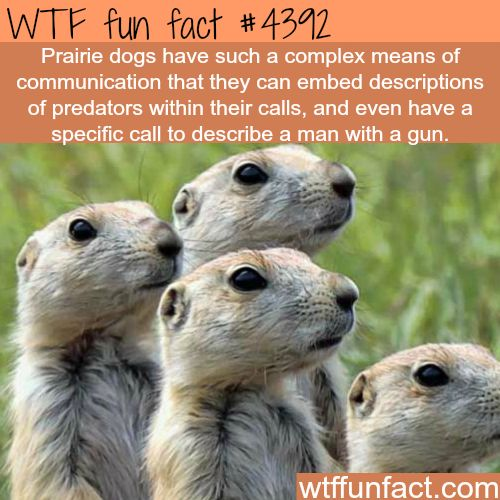 87 Best Facts That Interest Me Images On Pinterest: 2415 Best Images About Wtf Facts On Pinterest