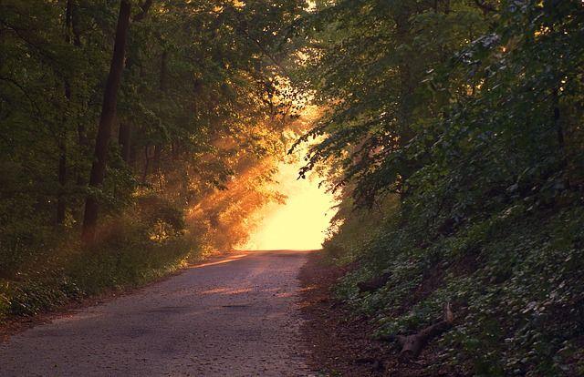 Sonnenlicht, Wald, Weg, Pfad, Abend, Sonnenuntergang
