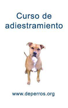 curso de adiestramiento canino
