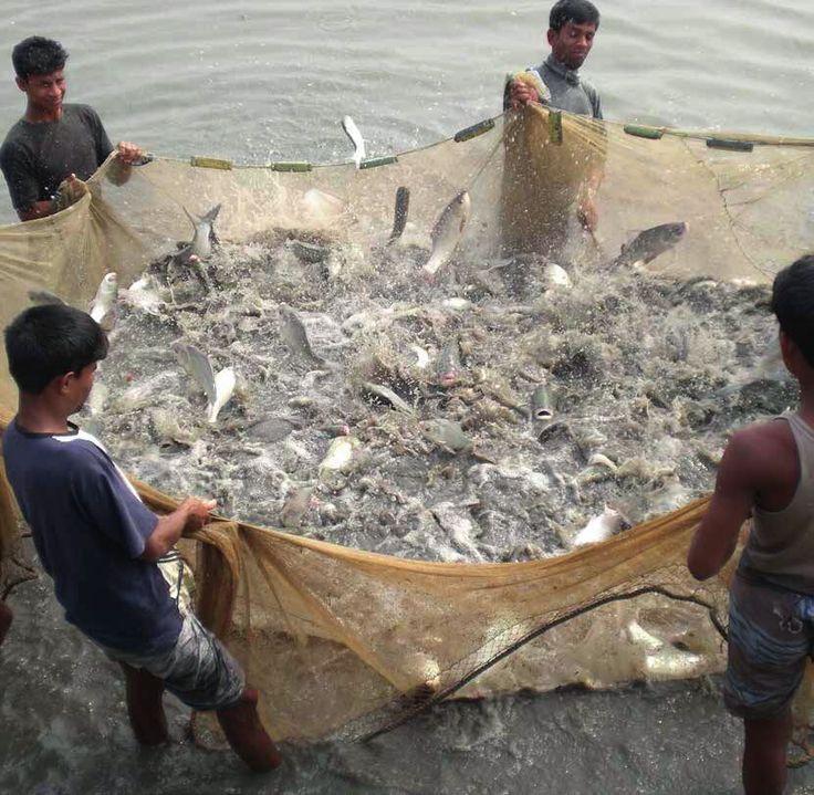 Kenya fishery Fish feed, Fish, Fish farming