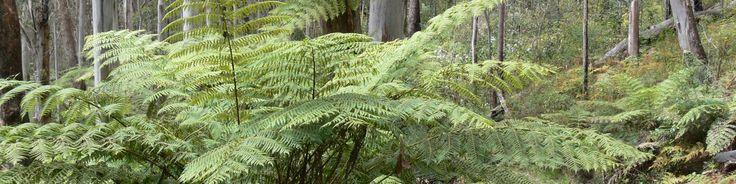 Cloud Forest, Carrai National Park