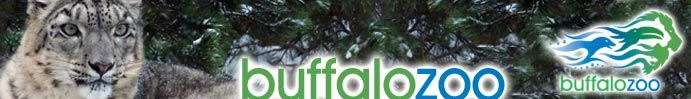 The Buffalo Zoo's Rainforest, Otter and Guerilla exhibits are my favorite!