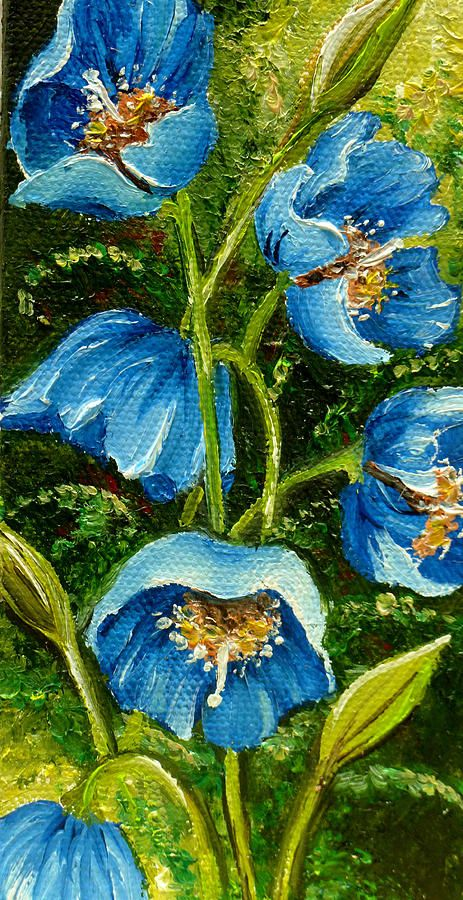 Blue Meconopsis By Karin Dawn Kelshall Best