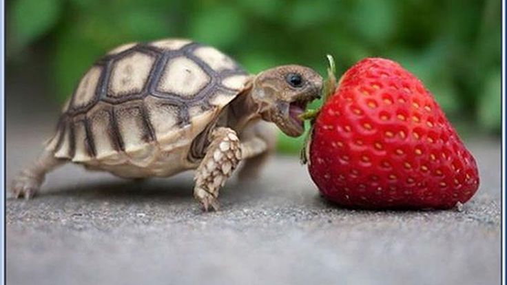 Top 10 Smallest Animals