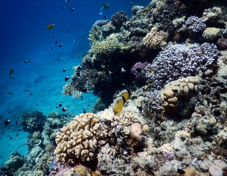 corals and fish in the red sea photo was taken by anett szaszi with a nikon - Compact Hotel 2015
