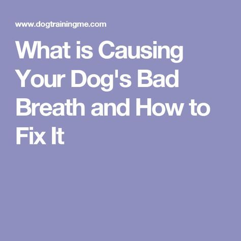 What is Causing Your Dog's Bad Breath and How to Fix It