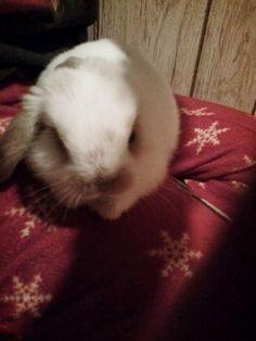First Few Weeks with Bunny (scheduled via http://www.tailwindapp.com?utm_source=pinterest&utm_medium=twpin&utm_content=post158047031&utm_campaign=scheduler_attribution)